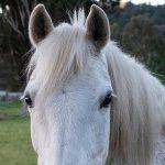 Profile picture of krisj