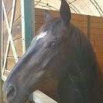 Profile picture of LeslieB